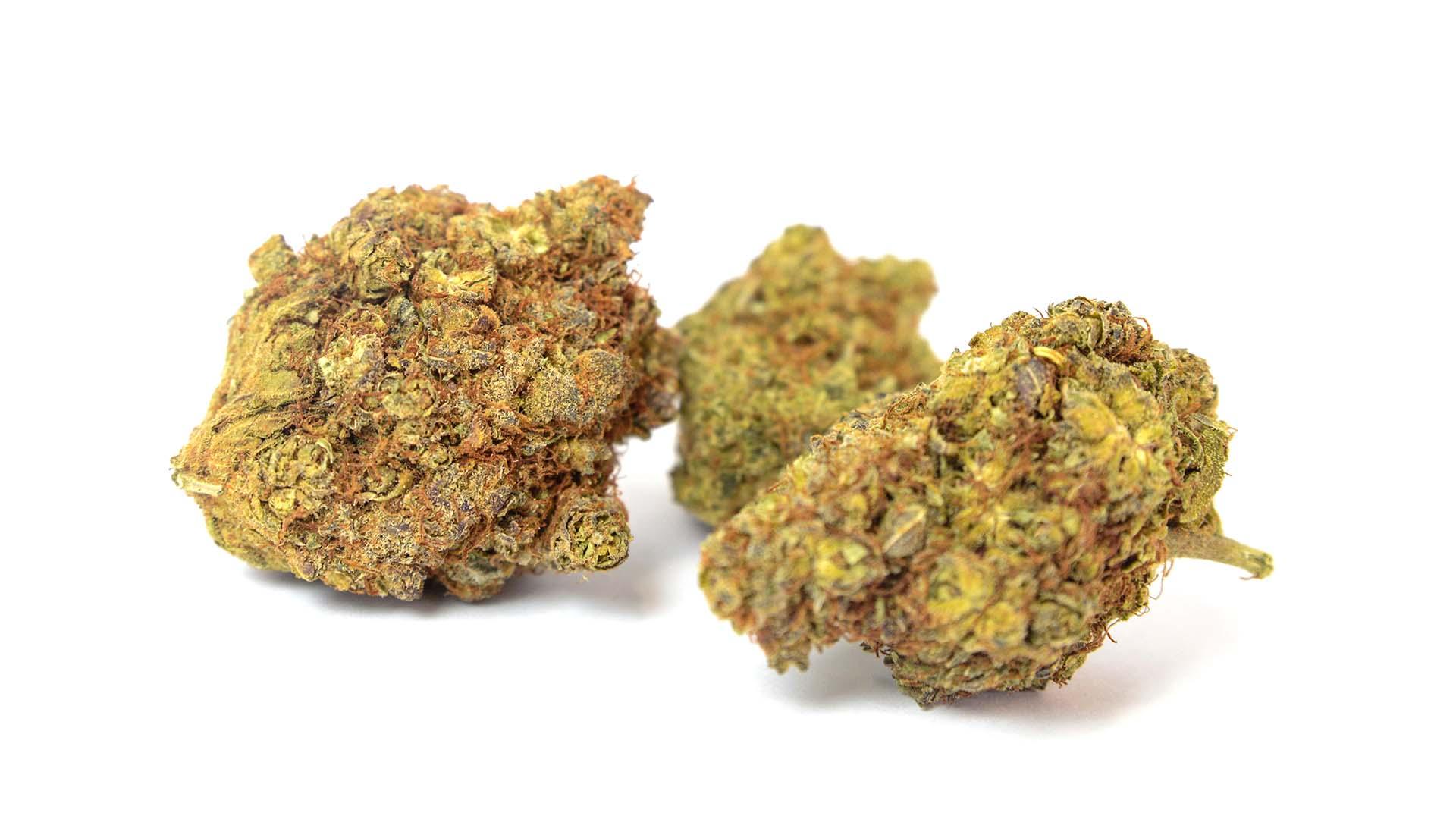 infiorescenze_Cannabis
